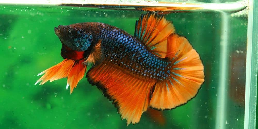 Best Betta Fish Food to Minimize Wastage and Maximize ...  Best Betta Fish...